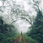 Bain de Forêt – Sylvothérapie